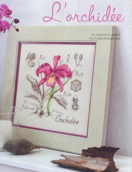 Орхидея из серии Ботаника